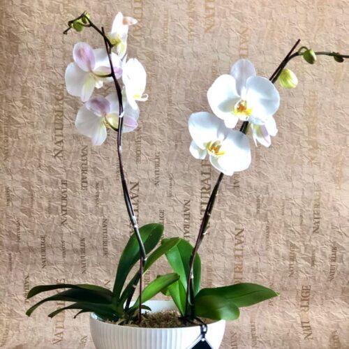 Arreglo de Orquídeas.